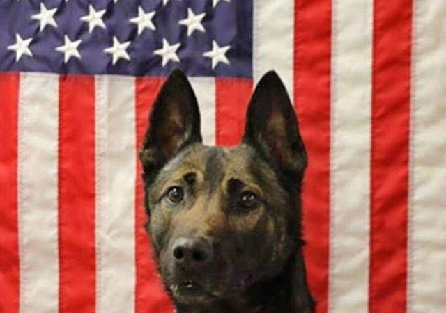 Army Ranger dog who died in Afghanistan saved soldiers' lives