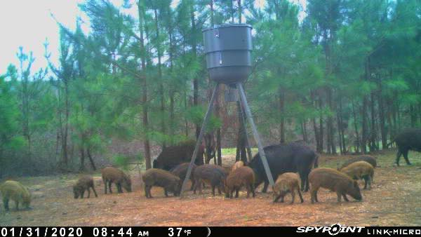 Hog Hunt Area